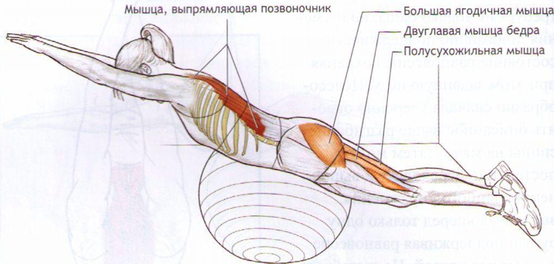Как расслабить мышцы спины и шеи 81